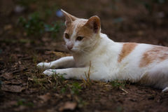 The white cat. Action of the white cat royalty free stock photography