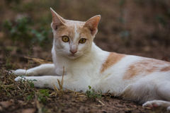 The white cat. Action of the white cat stock images