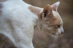 The white cat. Action of the white cat stock photos