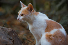 The white cat. Action of the white cat royalty free stock image