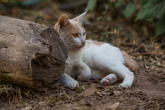 The white cat. Action of the white cat stock image