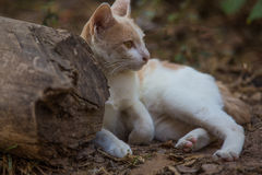 The white cat. Action of the white cat stock photography