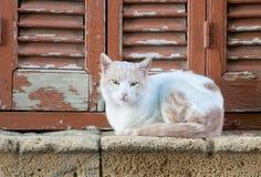 White Cat animal Stock Photo