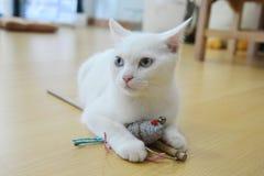 White cat Stock Photography