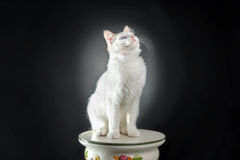 White cat background Stock Photo