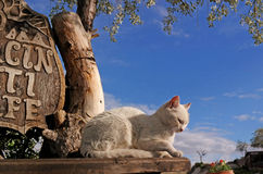 White cat. On a background of blue sky Royalty Free Stock Photos