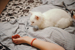 White cat on the bed. Stock Photo