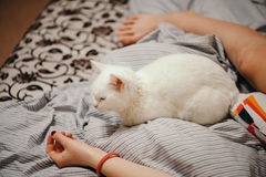 White cat on the bed. Stock Photography