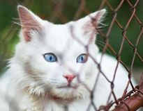 White cat behind grid Royalty Free Stock Image
