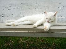 The white cat on bench. Stock Photography