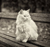 White cat on the bench Stock Photography
