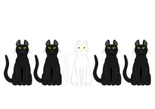 White cat in black cats. White cat sitting among black cats Royalty Free Stock Photography