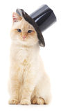 White cat in black hat. Stock Photos