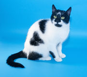 White cat with black spots sitting Stock Photo