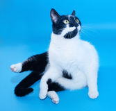 White cat with black spots sitting Stock Images