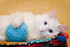 White cat with blue eyes. Shallow depth of field Royalty Free Stock Photo
