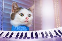 White cat in a blue scarf near piano . Concert of Classical Musi royalty free stock photo