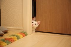White Cat Beside Brown Wooden Door in White Room Royalty Free Stock Images