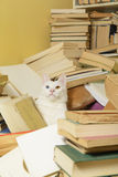White cat among a bunch of books. Selective focus. Stock Photography