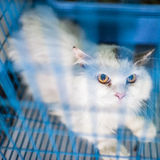 White cat in cage Royalty Free Stock Image