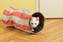 White cat in the cat tunnel. White cat (with one blue and one brown eye) lurking from the cat tunnel Stock Image