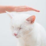 White cat. Stock Photos