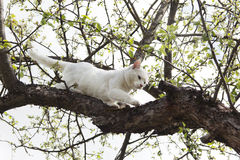 White cat climbs a tree. Climbing cat against cloudy sky Stock Photos