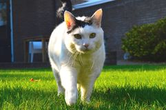 White cat in close-up Stock Photos