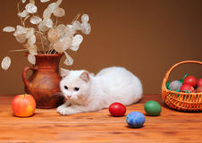 White cat and colored eggs Royalty Free Stock Photo