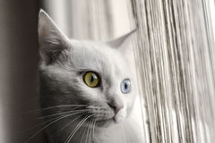 White cat. White cute cat with beautiful eyes Stock Photo