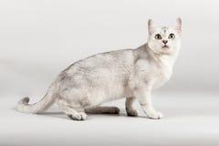 White cat. Cute white cat front sitting Stock Photo