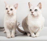 White cat. Cute white cat and kitten sitting Stock Photos