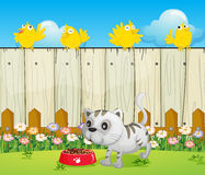A white cat with a dog food and four yellow birds Royalty Free Stock Images