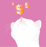 White cat and a dollar sign Stock Photo