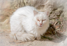 White cat with eyes closed . White vignette stock photos