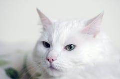 White cat face. Watching. Green eyes Royalty Free Stock Photos