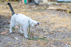 White cat fight green snake in untidy dirty garden, danger Royalty Free Stock Image