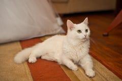 White cat on a floor. Stock Photos