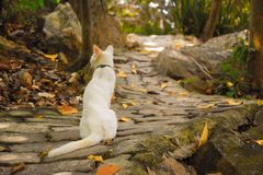 White Cat. In the forest. Vintage seen stock images