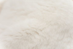 White Cat Fur. Close up of a white cat's fur showing the light color and fuzzy texture Royalty Free Stock Photo