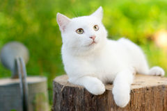 White cat in the garden. Isolated on a white background Stock Image