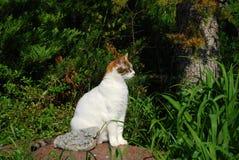 White cat in garden Stock Images