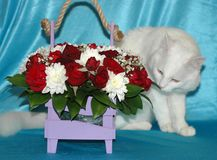 White cat gets acquainted with flowers. Stock Photography