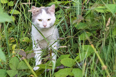 White cat glaring st the camera from the midst of a forestland Royalty Free Stock Image