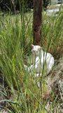 White cat in grass. Happy and sunbathing royalty free stock images
