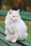 White cat on the green bench Royalty Free Stock Photography