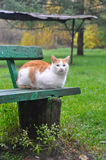 White cat on the green bench Stock Photo