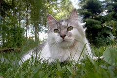The white cat with green eyes Stock Images