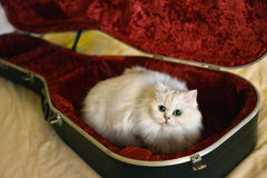 White cat with guitar. On sofa in the room Royalty Free Stock Photos