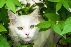 White cat. Cat hiding in the bush Royalty Free Stock Photos